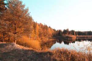 gyllene träd av hösten på en strandlinje av en liten sjö foto