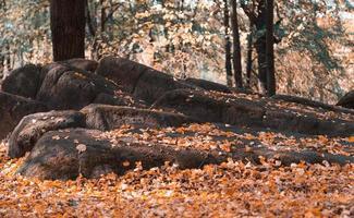 sten full av mossa och gula löv i den färgglada höstskogen foto
