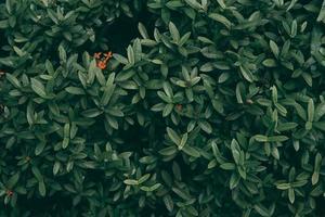 tropisk grön blad bakgrund foto