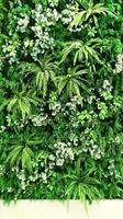 tropiska gröna blad foto