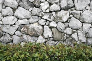 gammal stenvägg med grön växt foto