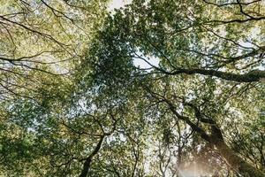 ljus himmel över träden foto
