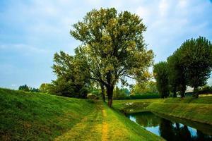 trädspår flod foto