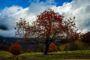 träd med röda blad foto