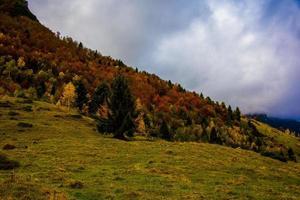 hösten variation av färgen på bladen en foto