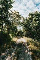 perfekt väg för vandring genom skogen foto