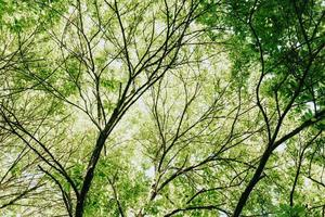 träd på en solig dag foto