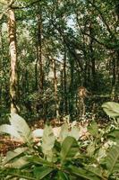 skog på sommaren foto