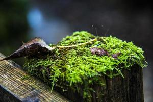 mossa under höstens skog foto