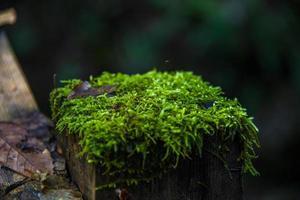 mossa på hösten underväxt tre foto
