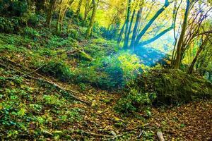 ljusstråle i skogen foto