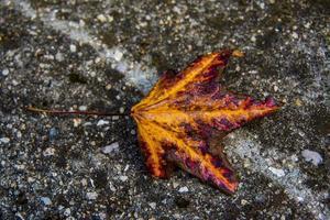 höstens färger foto