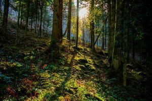sol filtrerar genom skogen foto