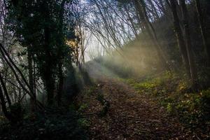 väg genom förtrollade skogar foto