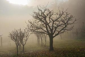 träd och dimma foto