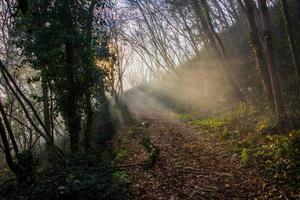 solen filtrerar genom höstens grenar foto