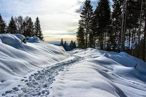 spår i snön en foto