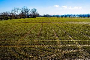 gröna linjer på ett sådd fält foto