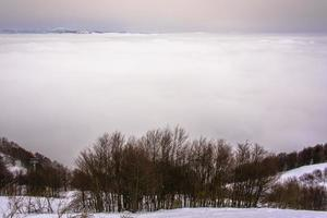 träd moln och snö två foto