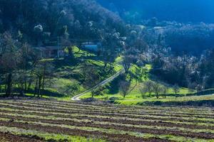 landsbygdslivet noll foto
