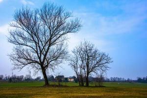 träd bland vinterängarna foto