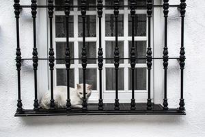 vit katt vitt fönster foto