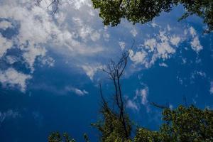 20210501 grancona sky och grenar foto