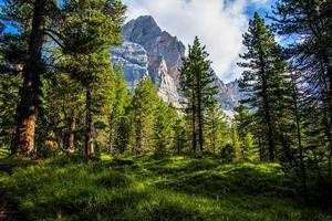 skog och dolomiter foto