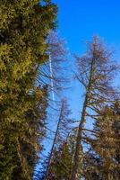 träd och himmel foto