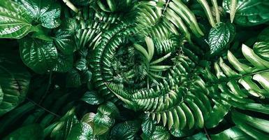 tropiskt grönt blad i mörk ton foto