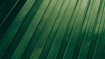 tropisk grön kokosnötblad textur bakgrund mörk ton foto