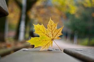 gult blad på bänken under höstsäsongen foto