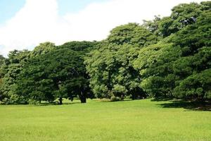 stora träd i trädgården foto