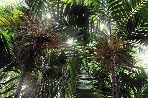 palmträd i trädgården tropisk bakgrund foto
