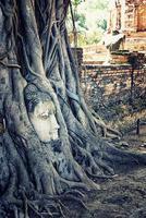 buddhahuvud i wat mahathat ayutthaya foto