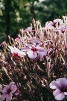 rosa blommor blommar under en ljus dag foto