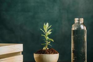 närbild av en växande växt i en kruka med en mörk bakgrund och en flaska vatten foto