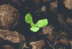 små salladsväxter i salladsgård foto