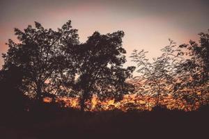 färgrik dramatisk himmel skog silhuett solnedgång foto