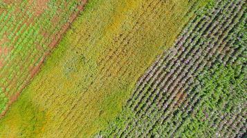blommaträdgårdbakgrund med den härliga färgglada blomman i Thailand foto