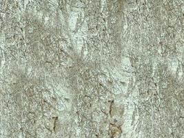 närbild av trädstammen för bakgrund eller konsistens foto