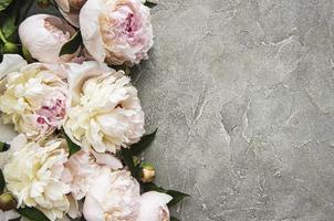 pionblommor på en grå betongbakgrund foto