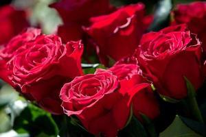 arrangemang av vacker röd rosbukett foto