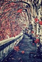 romagata på hösten foto