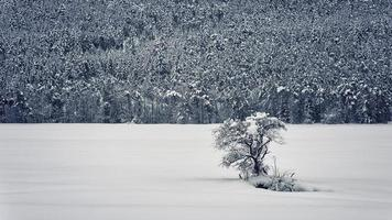 vinterlandskap i de franska alperna foto