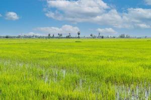 grönt risfält under blå himmel på landsbygden i Thailand foto