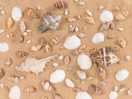 blandning av snäckskal på sandbakgrund foto