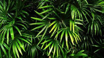 tropiskt grönt blad foto