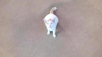 vit katt står på golvet foto