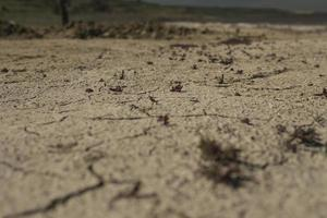 sprucken jord tapet foto